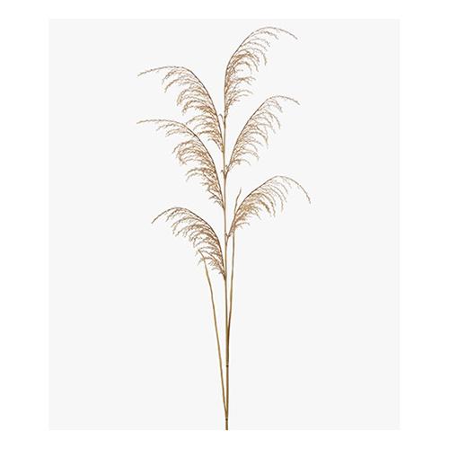 Grass Reed Spray Natural 130cml #FI8254NA - Each